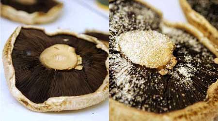 Clean Eating Portobello Mushroom Burger Recipe