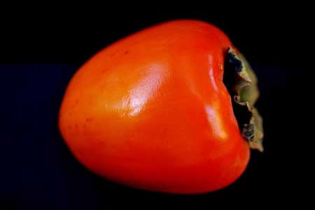 A single Hachiya Persimmon laying on it's side on a dark background