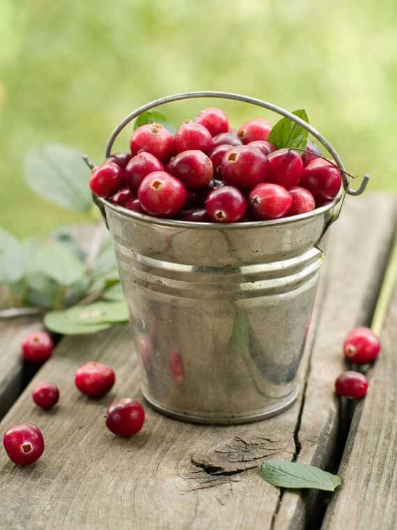 A bucket of fresh cranberries sits on a table with greenery in the background