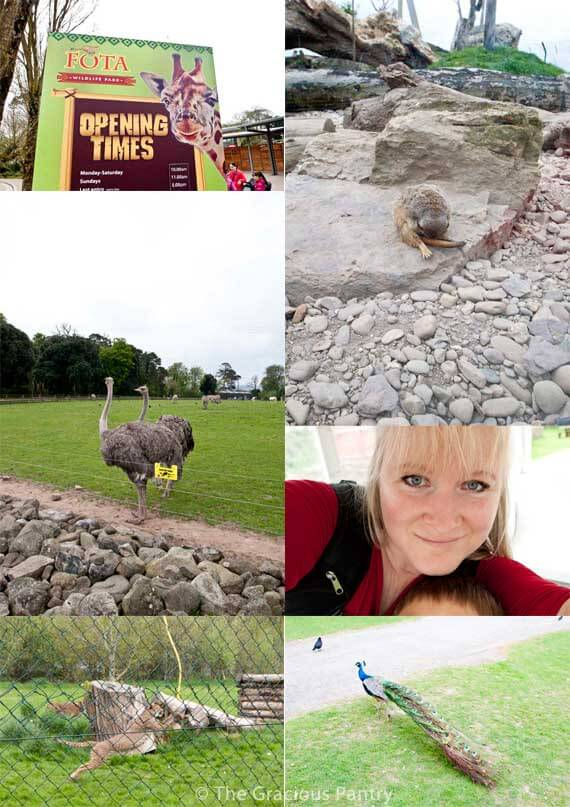 A photo collage of Fota Zoo in Ireland shows a few animals living at the zoo.