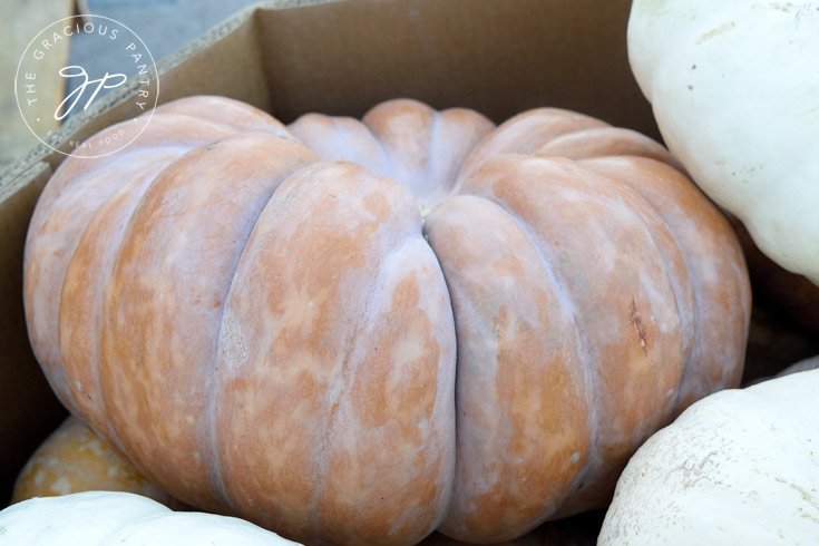 Best Pumpkins For Your Kitchen