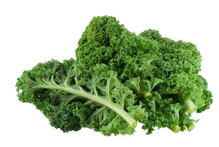 Curly kale on a white background