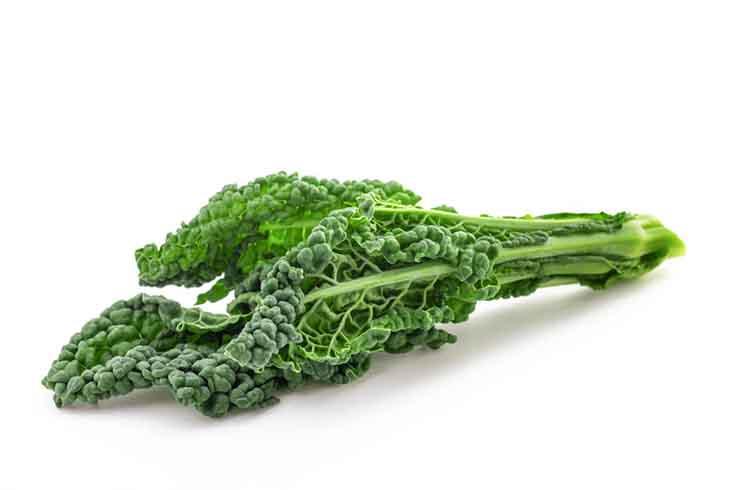 Lacinato Kale on a white background